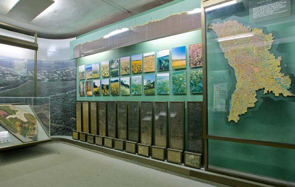 Colecţia botanică