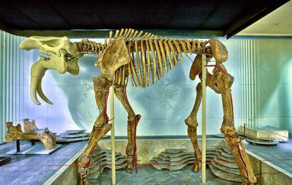 Colecţia paleontologică
