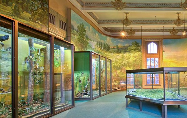 Colecţia zoologică