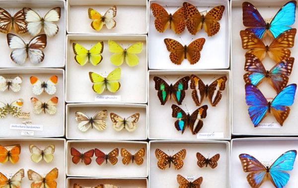 Colecția entomologică